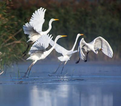 Szlaki ornitologicznes